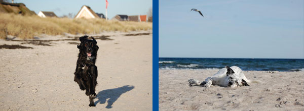 Urlaub mit Hund Hundestrand Boltenhagen